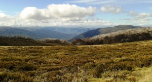 Bogong High Plains 2
