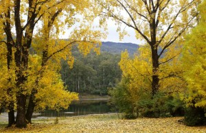 Autumn colours at Bogong Pondage