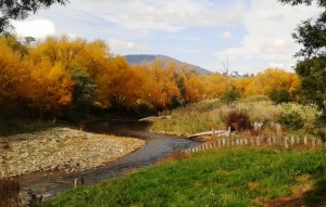 Autumn colours along the Dargo River