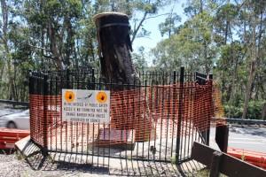 The historic Explorers Tree