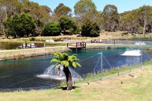Breeding ponds at trout hatchery