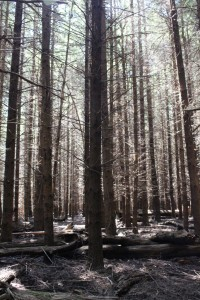 The sun filtering through the pine trees produced an attractive effect.
