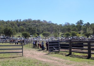 Mount Perry show action