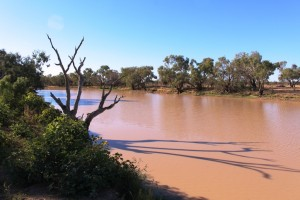 The never dry Thylungra waterhole