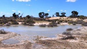 A permanent water soak near sand dunes where Cobb & Co stages used to cross the lake bed