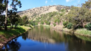 The tranquil Macalister River beside the caravan park at Licola.