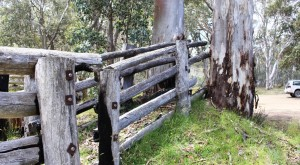 Rather clever positioning of a cattle yard at Tamboritha Saddle, 1300 metres above sea level.