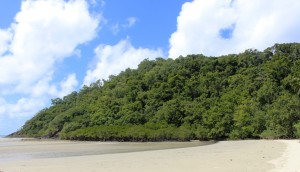 Rain forest on Cape Tribulation