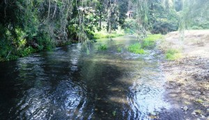 Canungra Creek runs along the back of the camping area