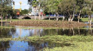 Ducks around a roadside pond as we left Rockhampton