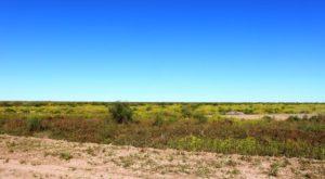 Lush vegetation on the flood plains of the Diamantina
