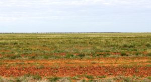 Grazing lands south of Mt Isa