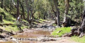 The hiking track into Wilpena Pound runs along the banks of this stream.