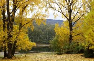 Autumn colours at Bogong Pondage