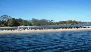 Cormorants crowd a sand bank.