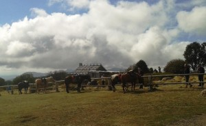 Horses tethered to the fence of Craig's Hut