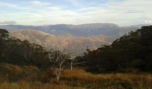 The view from a Mt Bulla street