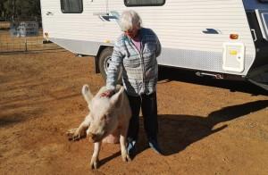 Myra with Patrick the pet pig.