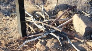 Discarded walking sticks