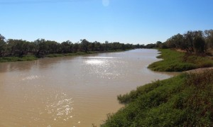 Goos water levels in the Thompson River at Longreach