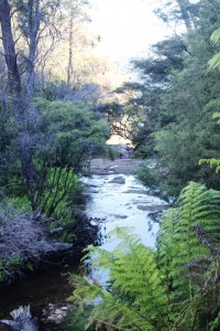 The final run of Katoomba Creek before it drops into the Jameson Valley.