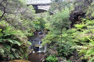 One of the falls in the Leura Falls group of cascades.