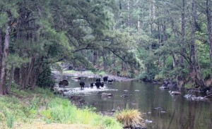 Manning River. Please boil the water before drinking!