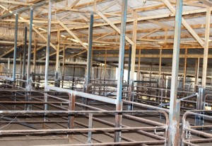 Sheep pens inside the wool shed