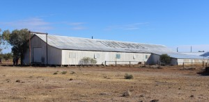 Thylungra wool shed