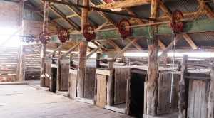 Sheering stations in the old Mungo Station woolshed
