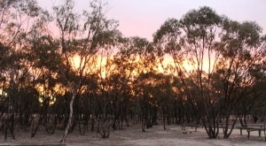 Sunset through the trees at Collarenabri