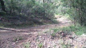 This is where we turned around on Collins Track.