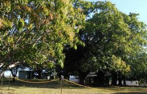 Accommodation under the shady Mango trees
