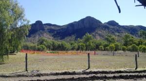 Hills near Springsure