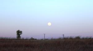 A full moon commences its assent