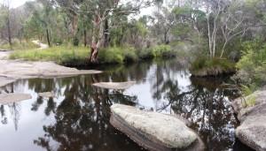 Waterhole in the creek on the Wybera morning walk