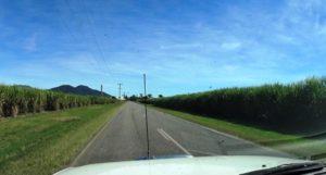 Driving through cane fields