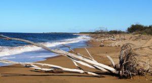 Beached flood debris on Rules Beach near Baffle Creek