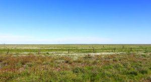 Sweeping plains near Winton