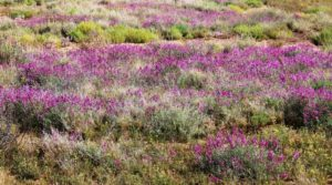 Some wild flowers along the way