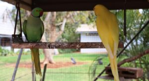 Caged birds on display at Barkly Homestead