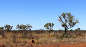 The broad plains of the Barkly Tableland