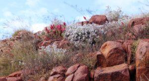 Nature's rock garden