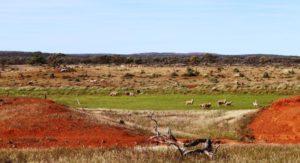 We passed several flocks of sheep