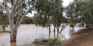 The swollen Warrego River at Cunnamulla. Water heading for the Darling River